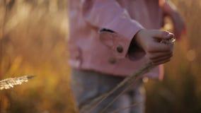Το χέρι των παιδιών αγγίζει το σπόρο χλόης στο ηλιοβασίλεμα φιλμ μικρού μήκους