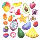 Το χέρι χρωμάτισε τα εξωτικά φρούτα καθορισμένα διανυσματική απεικόνιση