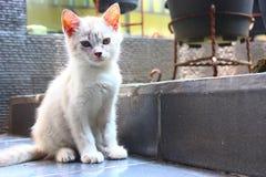 Το χαριτωμένο άσπρο γατάκι στοκ εικόνα