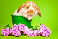 Το χαριτωμένο λαγουδάκι με τα ρόδινα λουλούδια κάθεται μέσα στο δοχείο Στοκ Εικόνες