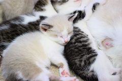 Το χαριτωμένο γατάκι λίγη γάτα μωρών κοιμάται Στοκ εικόνα με δικαίωμα ελεύθερης χρήσης