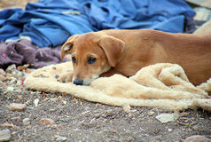 Το χαριτωμένο καφετί σκυλί περιμένει έξω Στοκ Φωτογραφίες