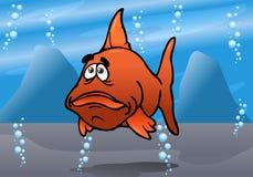 Το χαριτωμένο κόκκινο bash ψαριών Στοκ φωτογραφίες με δικαίωμα ελεύθερης χρήσης