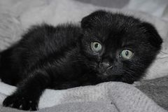 Λίγο μαύρο γατάκι με τα λυπημένα μάτια στοκ φωτογραφίες με δικαίωμα ελεύθερης χρήσης