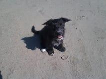 Το χαριτωμένο μαύρο pappie ανατρέχει beutifull παραλία άμμου στοκ φωτογραφίες με δικαίωμα ελεύθερης χρήσης