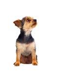 Το χαριτωμένο μικρό σκυλί με η τρίχα Στοκ φωτογραφία με δικαίωμα ελεύθερης χρήσης