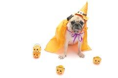 Το χαριτωμένο σκυλί μαλαγμένου πηλού κάθεται και κοιτάζει με το ευτυχές κοστούμι ημέρας αποκριών και Στοκ Φωτογραφίες