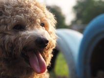 το χαριτωμένο σκυλί μου Στοκ φωτογραφία με δικαίωμα ελεύθερης χρήσης