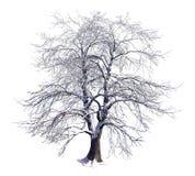 Το χειμερινό δέντρο στο χιόνι απομόνωσε την άσπρη τρισδιάστατη απεικόνιση απεικόνιση αποθεμάτων