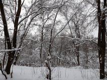 Το χειμερινό δάσος, δέντρα καλύπτεται με το χιόνι Στοκ Εικόνες