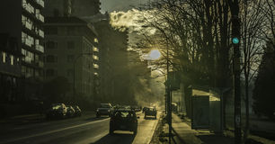 Το χειμερινό ομιχλώδες πρωί στοκ εικόνα