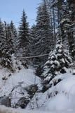 Το χειμώνα δασικά Carpathians Πολύ χιόνι, δέντρα που συσσωρεύονται επάνω στο χιόνι Στοκ φωτογραφία με δικαίωμα ελεύθερης χρήσης