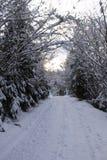 Το χειμώνα δασικά Carpathians Πολύ χιόνι, δέντρα που συσσωρεύονται επάνω στο χιόνι Στοκ Εικόνες