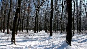 Το χειμώνα στο δάσος μετά από τις χιονοπτώσεις είναι όμορφος και ήρεμος φιλμ μικρού μήκους