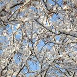 το χειμώνα Στοκ εικόνες με δικαίωμα ελεύθερης χρήσης