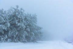 Το χιονισμένο δάσος πεύκων εξαφανίζεται στην ομίχλη Ρωσία, Stary Krym Στοκ φωτογραφία με δικαίωμα ελεύθερης χρήσης