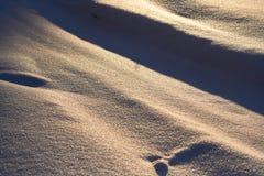 Το χιόνι αστράφτει στον ήλιο, που εξισώνει στα ξύλα Χριστούγεννα, νέο έτος, μυθική διάθεση το πρωί πριν από τις διακοπές αφηρημέν Στοκ φωτογραφίες με δικαίωμα ελεύθερης χρήσης