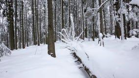 Το χιόνι βρίσκεται στις πορείες στο κωνοφόρο δάσος μετακινείται τον πυροβολισμό κίνηση αργή κλείστε επάνω απόθεμα βίντεο