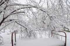 Το χιόνι ενέπεσε στον κήπο Το παλαιό κρεβάτι κάτω από ένα δέντρο στον κήπο ελάτε έχει το χειμώνα Στοκ Φωτογραφία