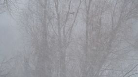 Το χιόνι πέφτει ενάντια στο δέντρο απόθεμα βίντεο