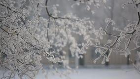 Το χιόνι πηγαίνει στα δέντρα απόθεμα βίντεο