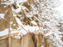 Το χιόνι σε έναν κλάδο το χειμώνα Χιόνι ΚΑΠ Φύση στον τοίχο Στοκ Εικόνα