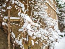 Το χιόνι σε έναν κλάδο το χειμώνα Χιόνι ΚΑΠ Φύση στον τοίχο Στοκ φωτογραφία με δικαίωμα ελεύθερης χρήσης