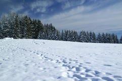 Το χιόνι στα βουνά, οροπέδιο ASIAGO, Βιτσέντσα, Ιταλία στοκ φωτογραφίες