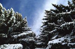 Το χιόνι στα βουνά, οροπέδιο ASIAGO, Βιτσέντσα, Ιταλία στοκ φωτογραφία