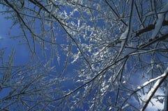 Το χιόνι στα δέντρα στο οροπέδιο ASIAGO, Βιτσέντσα, Ιταλία στοκ φωτογραφία με δικαίωμα ελεύθερης χρήσης