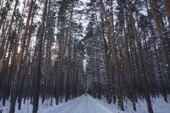 Το χιόνι στους κλάδους έφαγε στοκ εικόνες