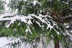 Το χιόνι στους κλάδους έφαγε στοκ εικόνα με δικαίωμα ελεύθερης χρήσης