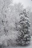 το χιόνι του Στοκ Φωτογραφία