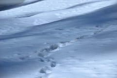 Το χιόνι Στοκ Εικόνες