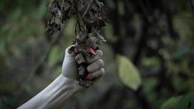Το χλωμό χέρι της γυναίκας zombie με το ζωηρό κόκκινο μανικιούρ αρπάζει με τη δύναμη και το λυσσασμένο ξηρό κλάδο της παλαιάς βαλ απόθεμα βίντεο