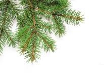 Το χριστουγεννιάτικο δέντρο προτύπων διακλαδίζεται σύνορα πέρα από απομονωμένο το λευκό υπόβαθρο, με το διάστημα για το κείμενό σ Στοκ εικόνες με δικαίωμα ελεύθερης χρήσης