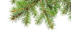 Το χριστουγεννιάτικο δέντρο προτύπων διακλαδίζεται σύνορα πέρα από απομονωμένο το λευκό υπόβαθρο, με το διάστημα για το κείμενό σ Στοκ φωτογραφίες με δικαίωμα ελεύθερης χρήσης