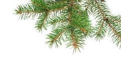 Το χριστουγεννιάτικο δέντρο προτύπων διακλαδίζεται σύνορα πέρα από απομονωμένο το λευκό υπόβαθρο, με το διάστημα για το κείμενό σ Στοκ φωτογραφία με δικαίωμα ελεύθερης χρήσης