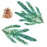 Το χριστουγεννιάτικο δέντρο Watercolor συμβόλων διακοπών διακλαδίζονται και ο κώνος κωνοφόρων που απομονώνεται στο άσπρο υπόβαθρο διανυσματική απεικόνιση