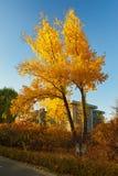 Το χρυσό ηλιοβασίλεμα δέντρων Στοκ φωτογραφίες με δικαίωμα ελεύθερης χρήσης
