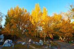 Το χρυσό ηλιοβασίλεμα φθινοπώρου φυσικό στοκ φωτογραφίες με δικαίωμα ελεύθερης χρήσης