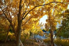Το χρυσό ηλιοβασίλεμα φθινοπώρου στοκ φωτογραφία