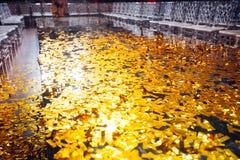 Το χρυσό κομφετί με το σπινθήρισμα ακτινοβολεί στο λοβό έκθεσης μόδας Στοκ Εικόνα