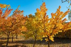 Το χρυσό τοπίο φθινοπώρου στοκ εικόνα
