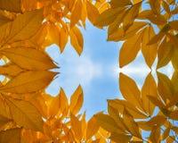 Το χρυσό φθινόπωρο βγάζει φύλλα Στοκ Εικόνα
