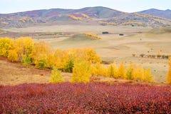 Το χρυσό φθινόπωρο του λιβαδιού στοκ φωτογραφία