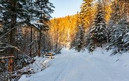 Το χρυσό χειμερινό δάσος στοκ εικόνες