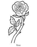 Το χρωματίζοντας βιβλίο, λουλούδι αυξήθηκε απεικόνιση αποθεμάτων