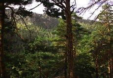 Το χρωματισμένο μυστήριο δάσος φθινοπώρου Στοκ εικόνα με δικαίωμα ελεύθερης χρήσης