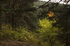 Το χρωματισμένο μυστήριο δάσος φθινοπώρου Στοκ Φωτογραφία